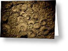 Snail Fossil Greeting Card