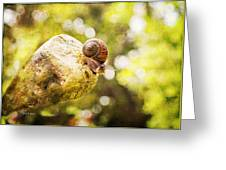 Snail Of A Time Greeting Card