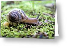 Snail On Billy Goat Trail Greeting Card