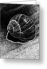 Snail Shell Black And White Art No.11 Greeting Card