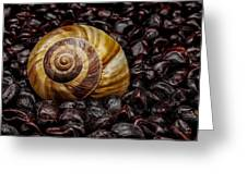 Snailshell In Tamarind Bed Greeting Card