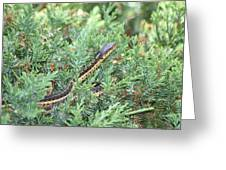 Snake In The Bush Greeting Card