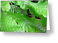 Snake Skin Plant Greeting Card