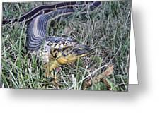Snake With Legs Greeting Card