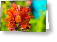 Snapdragon Flower Blurred Background Greeting Card