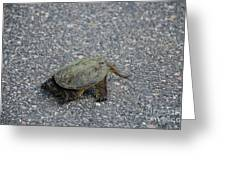 Snapping Turtle 3 Greeting Card