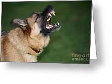 Snarling German Shepherd Dog Greeting Card