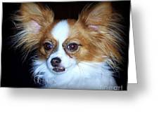 Snickers Greeting Card