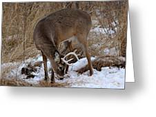 Sniffing Stag Greeting Card