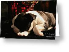 Snoozer Greeting Card