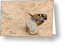 Snout Butterfly  Greeting Card