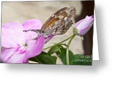 Snoutnose Butterfly Greeting Card