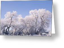 Snow And Ice Blanket Cottonwood Trees Greeting Card