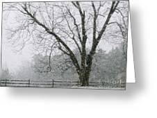 Snow And Pecan Tree Greeting Card
