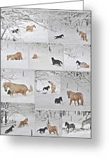 Snow Angels Paso Fino Style Greeting Card