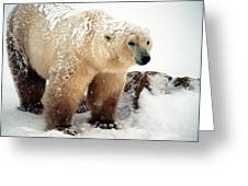 Snow Bear Greeting Card