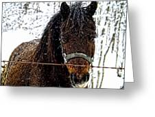 Snow Beauty Greeting Card