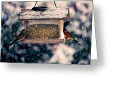 Snow Birds Greeting Card
