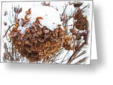 Snow Bonnet Greeting Card