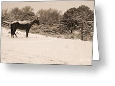 Snow Bound Horse Greeting Card
