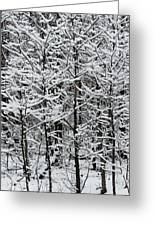 Snow Branches Greeting Card