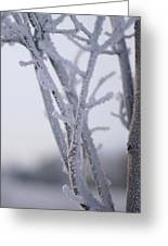 Snow Branches Greeting Card by Krista Sidwell