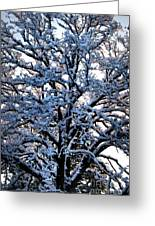 Snow Bright Greeting Card