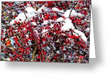 Snow Capped Berries Greeting Card