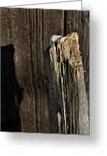 Snow Capped Fence Post Greeting Card
