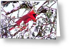 Snow Cardinal Greeting Card