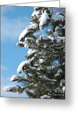 Snow-clad Pine Greeting Card