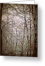 Snow Cover Forest Greeting Card by Dawdy Imagery