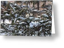 Snow Covered Branches Greeting Card by Brett Geyer