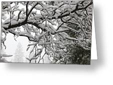 Snow Covered Branches Greeting Card