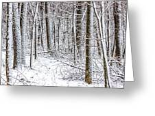 Snow Covered Forest 4 Greeting Card