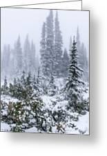 Snow Covered Mountain Ash Greeting Card