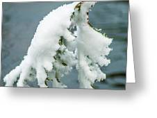 Snow Covered Pine Tree Branch Greeting Card