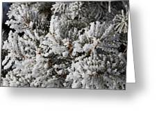 Snow Covered Pine Tree Greeting Card