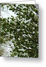Snow Covered Pine Trees Greeting Card
