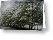 Snow Covered Pines Greeting Card
