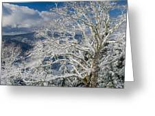 Snow Covered Tree And Winter Scene Greeting Card