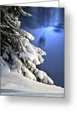 Snow Covered Tree Branches Greeting Card