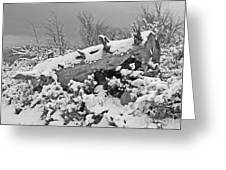 Snow Covered Tree Log In Black And White Greeting Card