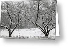 Snow Covered Trees In A Field. Greeting Card