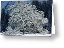 Snow Covered Winter Greeting Card
