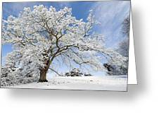 Snow Covered Winter Oak Tree Greeting Card