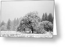Snow Day 3 Greeting Card by Joanna Pippen