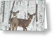 Snow Deer Greeting Card