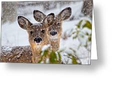 Snow Does Greeting Card
