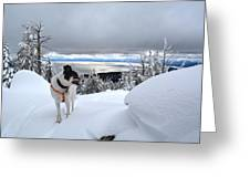 Snow Dog Greeting Card